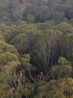 Image of Eurocopter crash - Watagans National Park, NSW